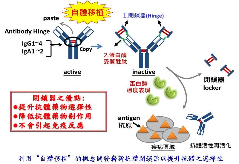 利用開發嶄新抗體閉鎖器,以提升抗體對疾病區域之選擇性